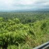 インドネシアからパプアニューギニア陸路国境越え